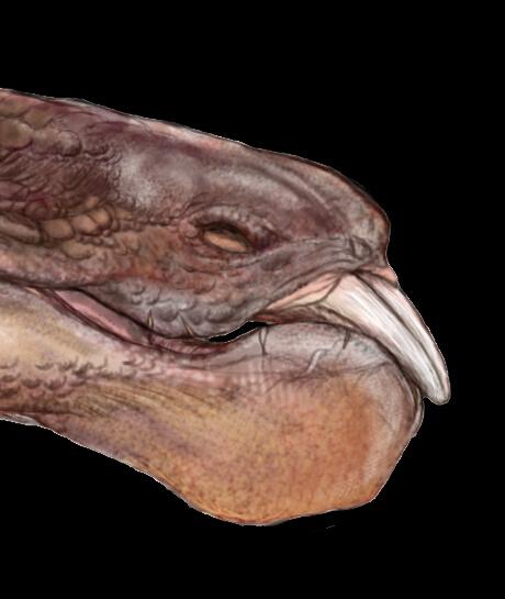 Zhongyuansaurus01.jpg